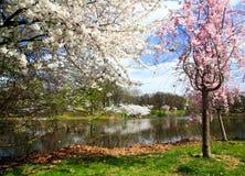 Il festival del fiore di ciliegia nel New Jersey Fotografia Stock Libera da Diritti