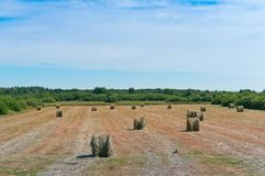 Il fieno torto nel campo, pacchi di fieno rotola sul terreno coltivabile fotografia stock