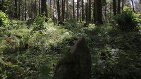 Il filtraggio del colpo del cimitero islamico abbandonato nell'erba e negli alberi della foresta si sviluppa sopra i monumenti gr archivi video