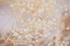 Il filtro d'annata dal fiore selvaggio ha messo a fuoco per il fondo di struttura Immagini Stock