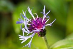 Il fiore Immagini Stock Libere da Diritti