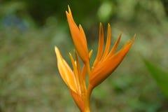 Il fiore Fotografie Stock Libere da Diritti