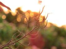Il fiore Fotografia Stock
