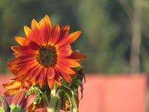 Il fiore Fotografie Stock