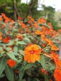 Il fiore arancio immagini stock libere da diritti