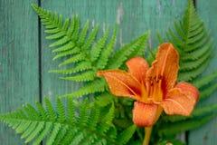 Il fiore arancio dell'emerocallide e la felce verde va su fondo di legno dipinto vecchia annata, copyspace Immagine Stock Libera da Diritti