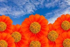Il fiore arancione con cielo blu Immagine Stock