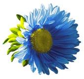 Il fiore blu del giardino su un bianco ha isolato il fondo con il percorso di ritaglio nave Primo piano nessun ombre, Fotografia Stock Libera da Diritti