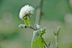 Il fiore con le foglie verdi è coperto di brina fotografia stock libera da diritti