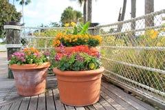 Il fiore conservato in vaso pianta il primo piano sul pilastro alla località di soggiorno di Disney Immagini Stock Libere da Diritti