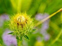Il fiore coperto di spine Fotografie Stock Libere da Diritti