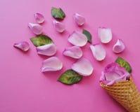 Il fiore del gelato è aumentato Sorgente Cialda del wafer per il gelato ed i petali rosa Vista da sopra Immagine Stock