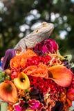 Il fiore del mostro Fotografie Stock Libere da Diritti