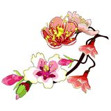 Il fiore del ramo della mandorla sboccia un'illustrazione di vettore del dado royalty illustrazione gratis