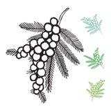 Il fiore dell'acacia Vectors gli elementi Immagini Stock Libere da Diritti
