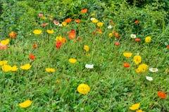 Il fiore dell'erba Immagine Stock Libera da Diritti