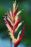 Il fiore dell'uccello di amore Fotografia Stock