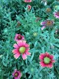 Il fiore dell'universo Fotografia Stock
