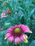 Il fiore dell'universo Fotografie Stock