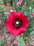 Il fiore della molla Immagine Stock Libera da Diritti