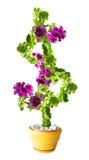 Il fiore della petunia assomiglia ad un grande simbolo di dollaro Fotografie Stock Libere da Diritti