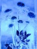 Il fiore della primavera fozen in ghiaccio Immagini Stock
