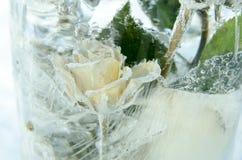 Il fiore della rosa in ghiaccio Fotografia Stock Libera da Diritti