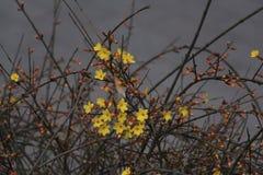 Il fiore della via della molla in anticipo a Pechino Immagine Stock Libera da Diritti