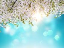 il fiore di ciliegia 3D va su un fondo del cielo blu royalty illustrazione gratis