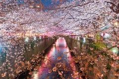 Il fiore di ciliegia ha allineato il canale di Meguro alla notte a Tokyo, Giappone Spri fotografie stock