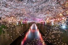 Il fiore di ciliegia ha allineato il canale di Meguro alla notte a Tokyo, Giappone Spri immagine stock libera da diritti
