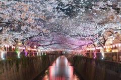 Il fiore di ciliegia ha allineato il canale di Meguro alla notte a Tokyo, Giappone Spri fotografia stock