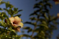 Il fiore di fumo Fotografia Stock Libera da Diritti