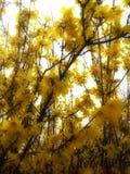 Il fiore di maggio Fotografia Stock