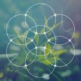 Il fiore di vita il collegamento circonda il simbolo antico davanti al fondo fotorealistico vago della natura La geometria sacra  fotografia stock libera da diritti