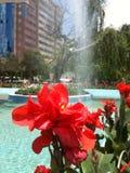 Il fiore e la fontana Fotografie Stock