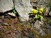 Il fiore fa il suo modo da parte a parte Immagini Stock