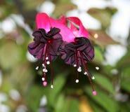 Il fiore guarda quasi fuori dal mondo immagine stock