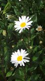 Il fiore ha contenuto l'arboreto Nottingham Regno Unito immagini stock libere da diritti