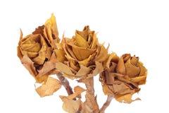 Il fiore ha fatto i fogli di autunno del ââof Fotografia Stock