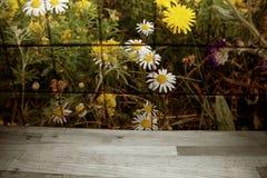 Il fiore ha modellato le mattonelle con le pedane ed i denti di leone fotografia stock
