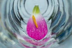 Il fiore isolato lascia in un vetro immagine stock