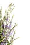 Il fiore isolato su bianco Immagini Stock