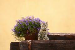 Il fiore kiiten Immagine Stock