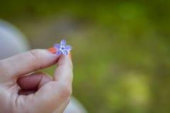 Il fiore lilla - cinque foglie Fotografia Stock Libera da Diritti
