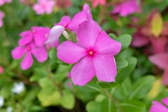 Il fiore nel giardino fotografie stock