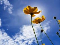 Il fiore nell'ambito di luce solare Fotografia Stock