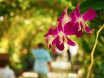 Il fiore piacevole dell'orchidea Fotografia Stock