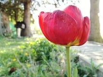 Il fiore rosso Fotografie Stock Libere da Diritti