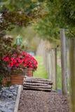 Il fiore rosso con il recinto ed il legno alloggiano il pacco immagini stock